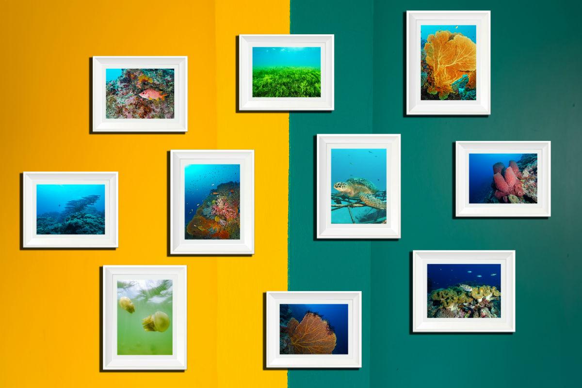 f93da7322 Ah! E as paredes com tons vibrantes ganham um efeito notório em sintonia  com fotos predominantemente claras.
